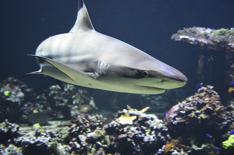 5 Things Entrepreneurs Can Learn From Shark Tank